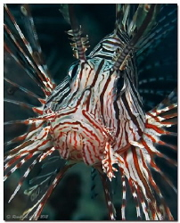 -war paint (II)-